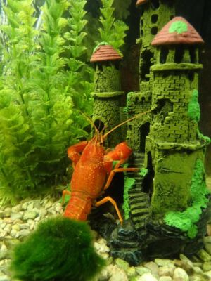 aquariumdekoration-768x1024